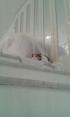 La gatta di Fanny