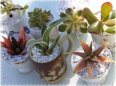 What about this idea to go with your lil plant idea mugs? wedding favors...with thrifted mugs perhaps... hmm.