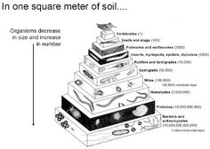 73 Best Teaching: Soil Science/Natural Resource images in