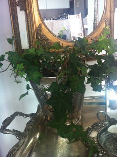 plants some england at home green love decor life