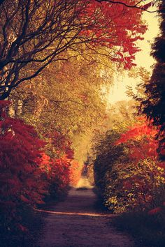 Landscape And Nature Autumn Scenes, Seasons Of The Year, All Nature, Fall Pictures, Fall Season, Pathways, Autumn Leaves, Autumn Harvest, Beautiful World