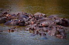 Chobe National Park, Botswana, Acacia Africa
