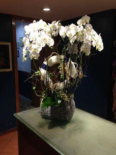 Nişantaşı incimiz çiçekliği