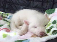 A raposa doméstica que tem conta no Instagram - CelebrityRED