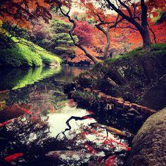 日本庭園@八芳園