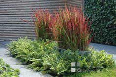 Prachtig Japans bloedgras in een natuurlijke strakke tuin in Benthuizen