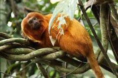 fotos de fauna e flora da amazônia - Pesquisa Google