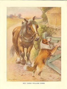 Horse and collie