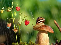 Slugs DO live in a magical world :).