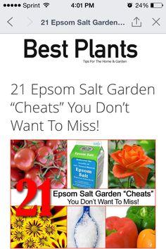 Uses For Epsom Salt In The Garden And Salts On Pinterest