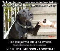 Save Life, True Stories, Pet Adoption, Wolf, Harry Potter, Sad, Pets, Quotes, Animals