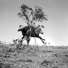 'sidney nolan: drought photographs