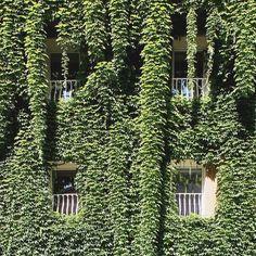 #green #facade is a #cliche - #sustainability is a #cliche - @fd_esign [[[ #facade #project ]]] {{{ #italy #architecture #Rome }}}