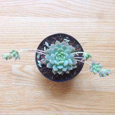 Vivarium succulents Vivarium, Cactus, Herbs, Landscape, Floral, Green, Nature, Inspiration, Garden