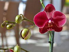 Ikebana, Indoor Plants, Orchids, Diy And Crafts, Bonsai, Gardening, Gardens, Orchids Garden, Plant