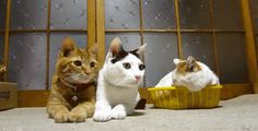 <3 <3 <3 I want these cats