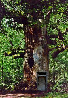 Eiche im Wald (mein geheimer Sommersitz)