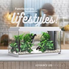 Advance LED range: with 6 different models.   #aquatlantisaquarium #aquariums #fishtanks #aquaria #ledlighting #starterkits #aquatics #aquários #decorideas #decoration