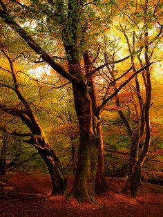 Autumn Glow by gingiber, via Flickr