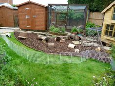 Here is my guinea pigs outdoor area. They come out here each day to exercise, explore and graze on the grass!