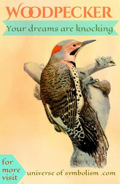 Woodpecker Spirit Animal Proclaims Your Dreams Are Knocking You Ready To Answer The Call