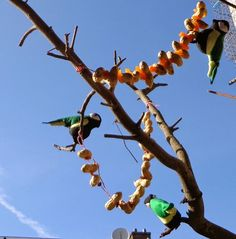 Pindasnoeren voor de vogels maken Kinds Of Birds, Bird Houses, Plants, Diy, Bricolage, Birdhouses, Diys, Planters, Handyman Projects