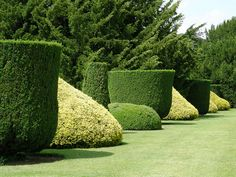 topiary hedges    Neat topiary work has sculpted these hedges in Sudeley Castle into pleasingly rounded shapes.