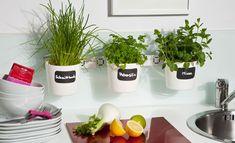 Növényi polc a konyhaablakon | Zöldségek, gyümölcsök és gyógynövények | selbst.de