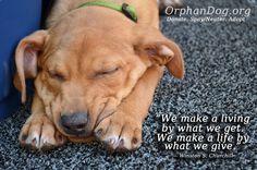 http://orphandog.org