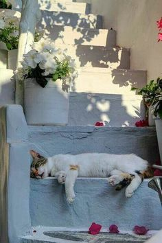You can tell how serene 'siesta time is in the Greek islands. 'Everybody naps. (Naxos island). Let #archaeologous.com (tour specialist) assist with 'your' #Greek #vacation