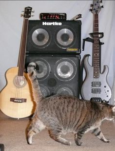 My new rig: TC Electronic RH450 head, Hartke TP cabs (a 2X10 and a 4X10).