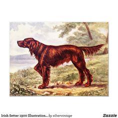 Irish Setter 1900 Illustration of Sporting Dog Photo Print
