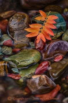 Autumn leaves on water-covered rocks. So serene.