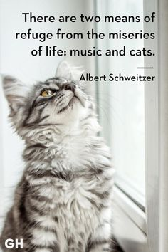 Catch Cat Quotes Sum Up Cats Purr-fectly - World's largest collection of cat memes and other animals Pretty Cats, Beautiful Cats, Funny Cat Videos, Funny Cats, Funny Jokes, Cool Cats, Kittens Cutest, Cats And Kittens, Orange Kittens