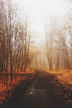 Lets walk down this cool autumn road.