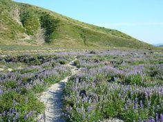 Loowit Trail - Mount St Helens