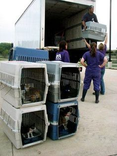 181 Pets Escape Hurricane Isaac's Path       SPCA workers in Texas helped evacuate cats and dogs before the storm hit.