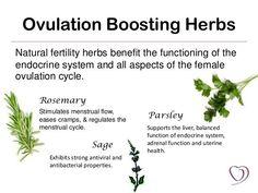 Natural Fertility Boosting Foods