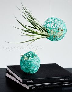 Abstract air plant terrarium holder / hanging terrarium