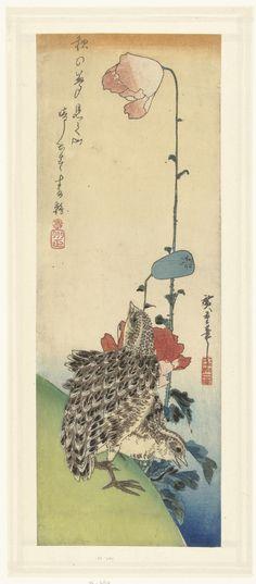 Twee kwartels op een helder groene helling bij een roze en rode bloeiende papaver; linksboven een gedicht.    Naar ontwerp van: Utagawa Hiroshige (I)  (1797 - 1858)