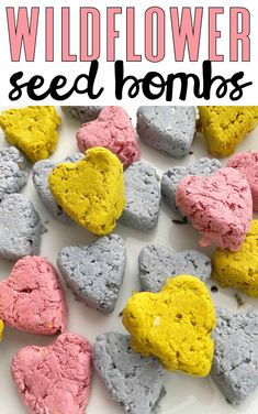 Wildflower Seed Bombs - I Can Teach My Child! Spring Crafts For Kids, Diy Projects For Kids, Arts And Crafts Projects, Science Activities For Kids, Spring Activities, Blender Food Processor, Food Processor Recipes, Seed Bombs, Things To Do At Home
