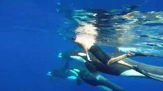 GoPro: OOM - Orcinus Orca Mayotte