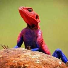 #16. Spider-Man Lizard