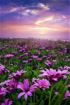 Beautiful World, Beautiful Places, Beautiful Pictures, Flower Pictures, Nature Pictures, Image Nature, Amazing Nature, Beautiful Landscapes, Wild Flowers