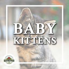 Kitten Treats, Kitten Food, Baby Kittens For Sale, Cat Health Care, Cat Diet, Canned Cat Food, Mental Training, Cat Care Tips, Baby Massage