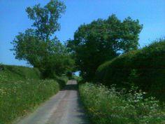 Devon in June. Photo (c) Serena Cairns