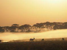 Classic Shumba sunrise - lechwe in the mist Close Proximity, Predator, Wilderness, Mists, Safari, Sunrise, Camping, Mountains, Bergen