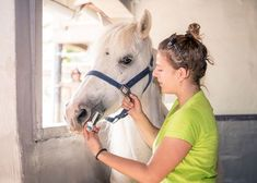 Both anti-inflammatory drugs reduced fecal microbial diversity, which could negatively impact horse health.