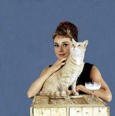 """Audrey como Holly em mais uma foto com gato para publicidade de """"Breakfast at Tiffany's"""", 1961"""