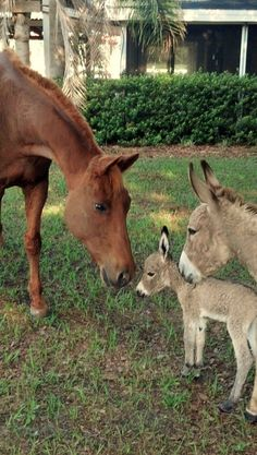 Baby Donkey!!!!  Proud mother with baby & tenderly curious horse  Proud Mother